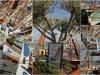 fete-des-capians-a-bandol-1er-juin-20123